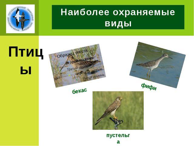 Наиболее охраняемые виды Птицы бекас пустельга фифи