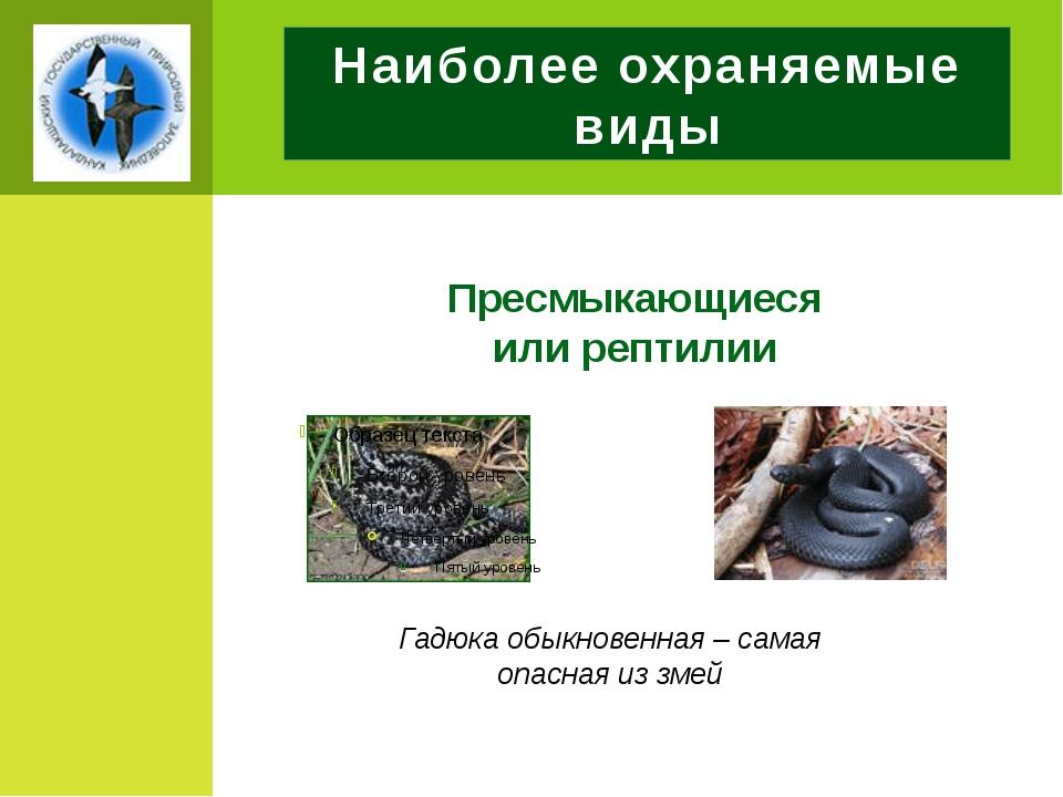 Наиболее охраняемые виды Пресмыкающиеся или рептилии Гадюка обыкновенная – са...
