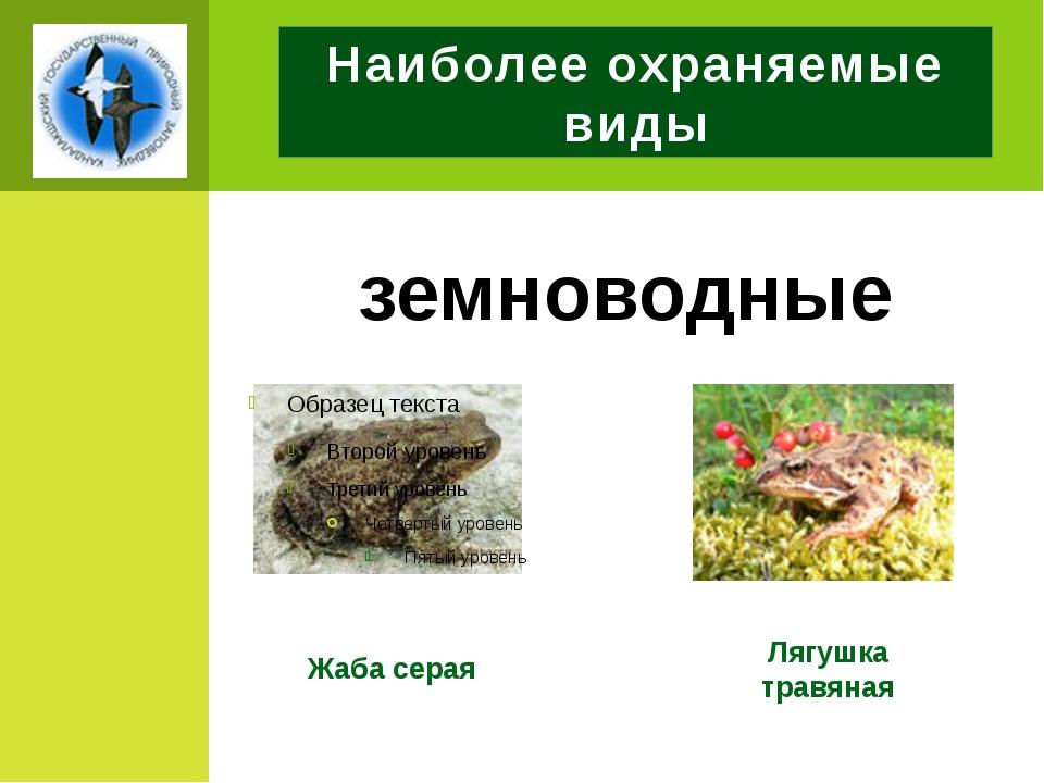 Наиболее охраняемые виды земноводные Жаба серая Лягушка травяная