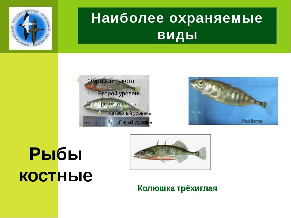 Наиболее охраняемые виды Колюшка трёхиглая Рыбы костные
