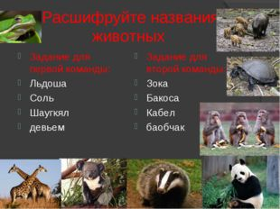 Расшифруйте названия животных Задание для первой команды: Льдоша Соль Шаугкя