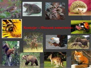Конкурс « Покажи животного»
