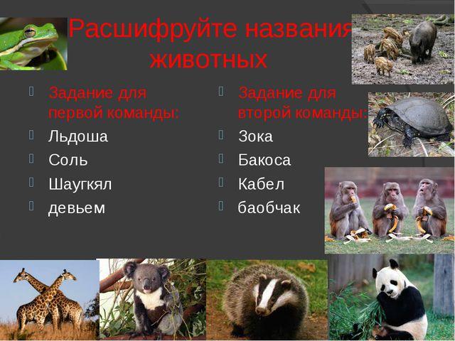 Расшифруйте названия животных Задание для первой команды: Льдоша Соль Шаугкя...