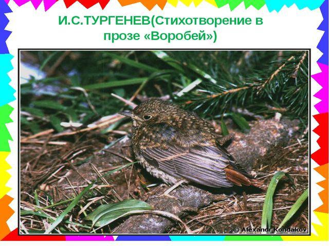И.С.ТУРГЕНЕВ(Стихотворение в прозе «Воробей»)