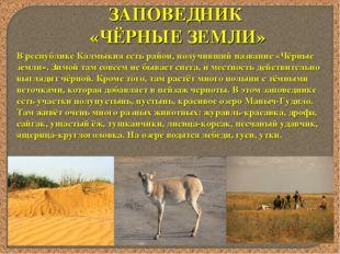 ЗАПОВЕДНИК «ЧЁРНЫЕ ЗЕМЛИ» В республике Калмыкия есть район, получивший назван