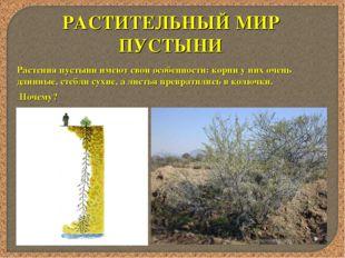 РАСТИТЕЛЬНЫЙ МИР ПУСТЫНИ Растения пустыни имеют свои особенности: корни у них