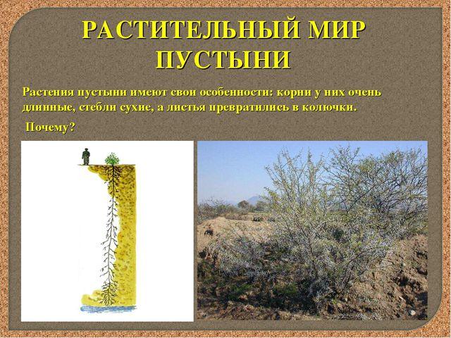 РАСТИТЕЛЬНЫЙ МИР ПУСТЫНИ Растения пустыни имеют свои особенности: корни у них...