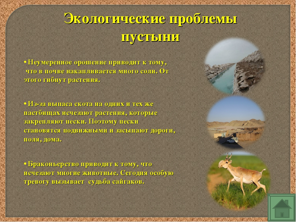 Экологические проблемы пустыни Неумеренное орошение приводит к тому, что в по...