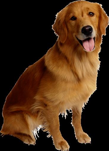 Собаки (19 фото)