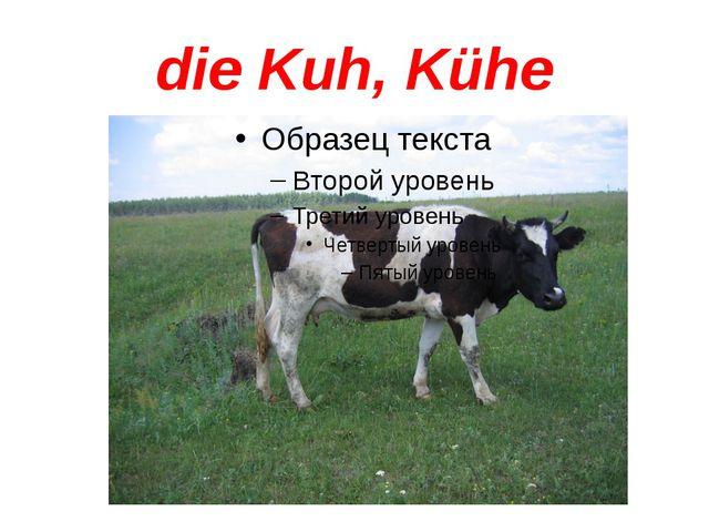 die Kuh, Kühe