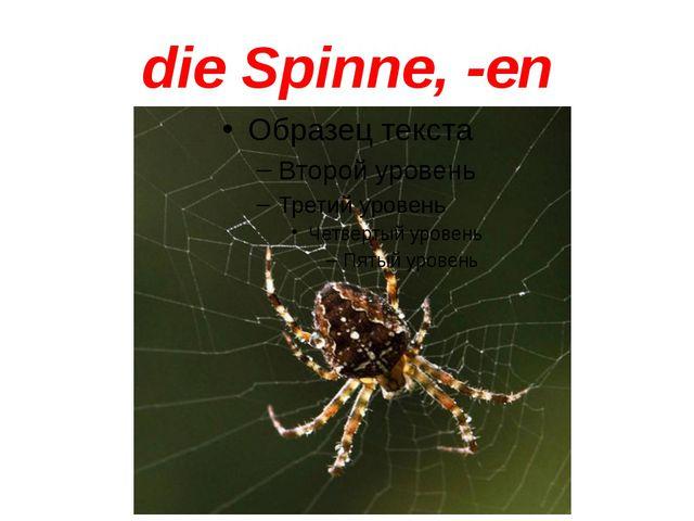 die Spinne, -en