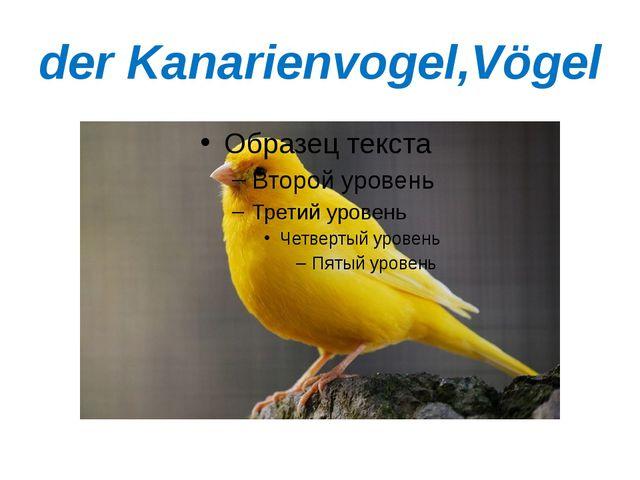 der Kanarienvogel,Vögel