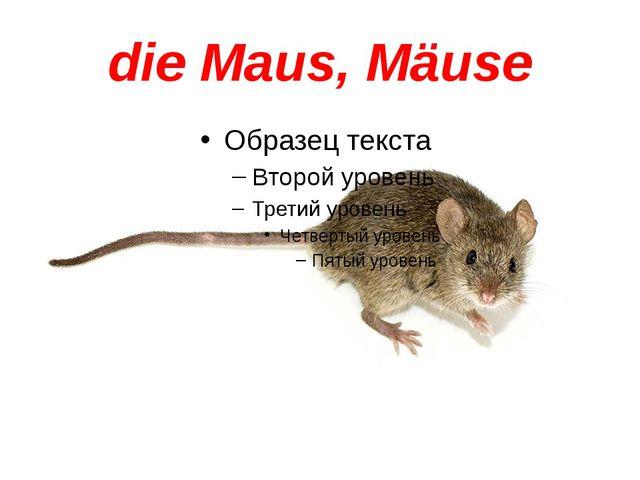 die Maus, Mäuse