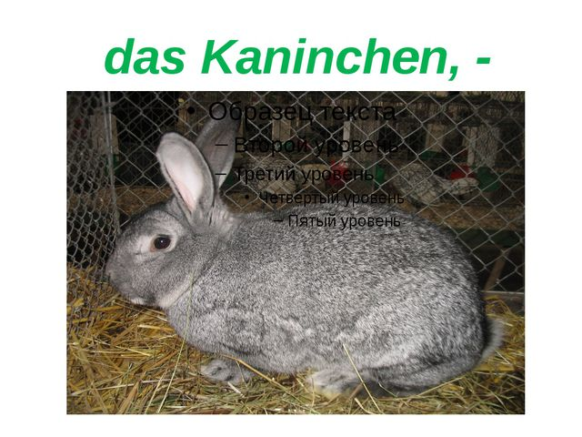 das Kaninchen, -