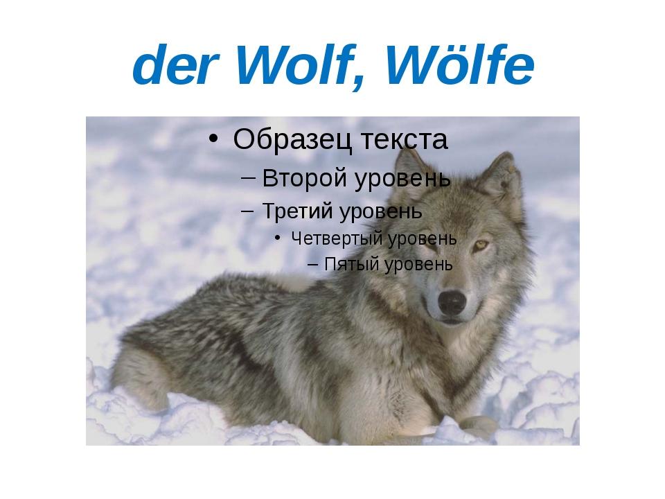 der Wolf, Wölfe