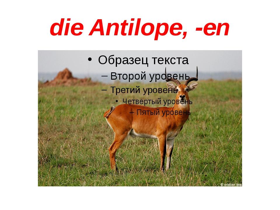 die Antilope, -en