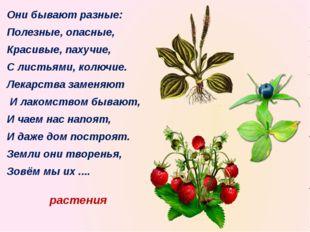 растения Они бывают разные: Полезные, опасные, Красивые, пахучие, С листьями,
