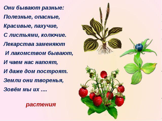 растения Они бывают разные: Полезные, опасные, Красивые, пахучие, С листьями,...