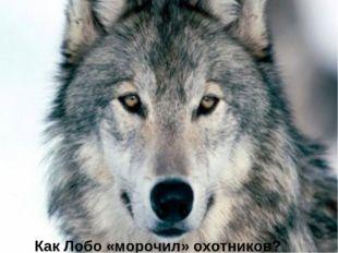 Как Лобо «морочил» охотников?