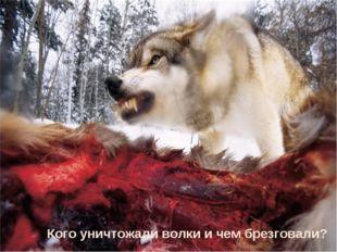 Кого уничтожали волки и чем брезговали?