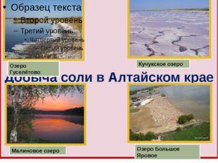 Добыча соли в Алтайском крае Озеро Гуселётово Кучукское озеро Малиновое озеро