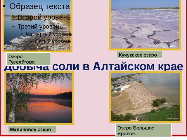 Добыча соли в Алтайском крае Озеро Гуселётово Кучукское озеро Малиновое озеро...