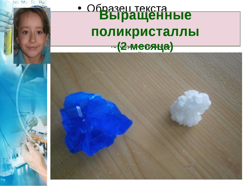 Выращенные поликристаллы (2 месяца)