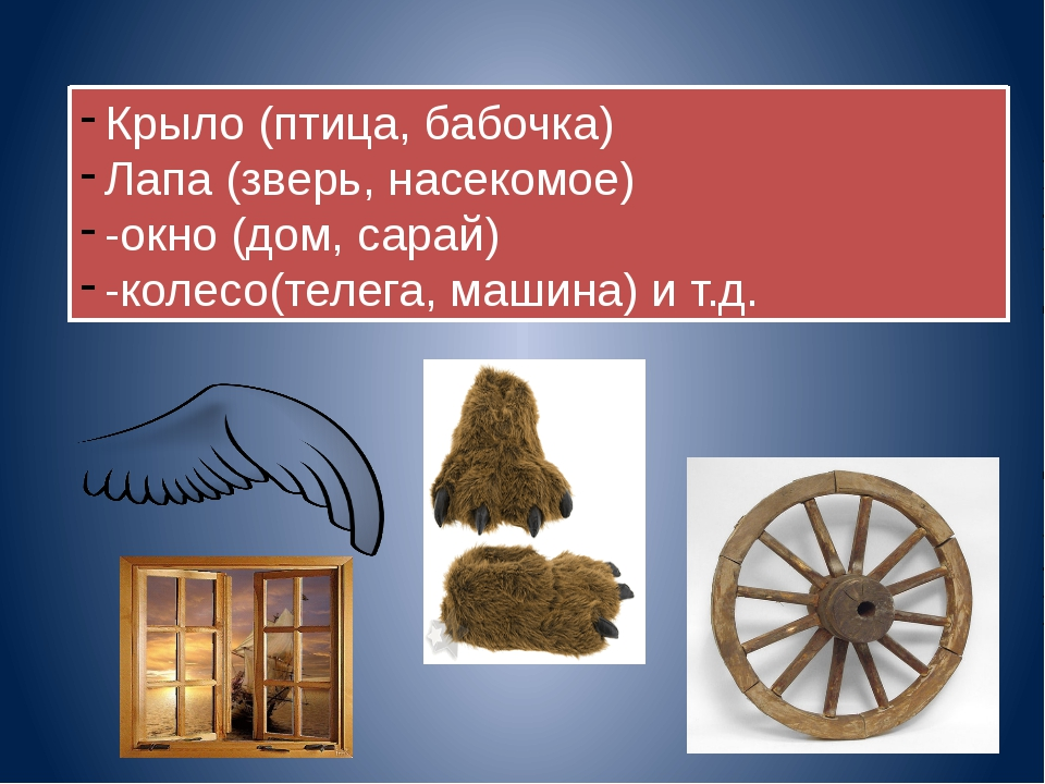 Крыло (птица, бабочка) Лапа (зверь, насекомое) -окно (дом, сарай) -колесо(тел...