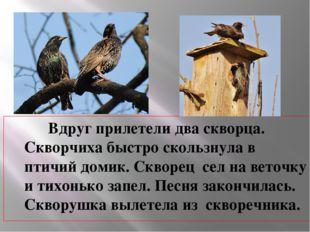 Вдруг прилетели два скворца. Скворчиха быстро скользнула в птичий домик. Скв