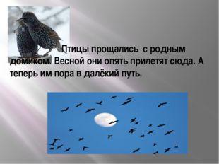 Птицы прощались с родным домиком. Весной они опять прилетят сюда. А теперь и