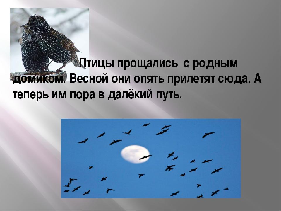 Птицы прощались с родным домиком. Весной они опять прилетят сюда. А теперь и...