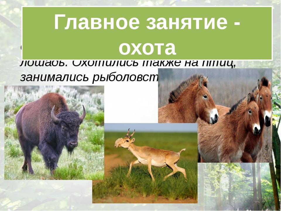 Охотились на бизонов, сайгу, дикую лошадь. Охотились также на птиц, занимали...