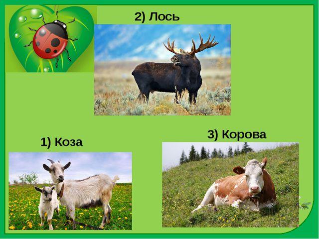 2) Лось 1) Коза 3) Корова