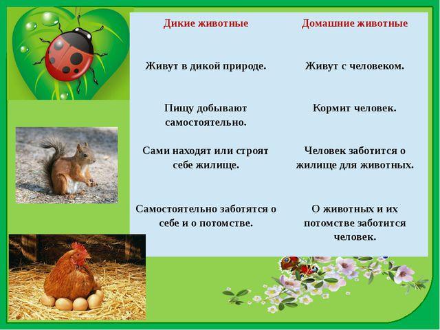 Дикие животные Домашние животные Живут в дикой природе. Живут с человеком. Пи...