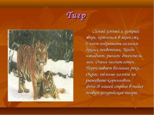 Тигр Самый умный и хитрый зверь, прячется в зарослях. Умеет подражать голосам