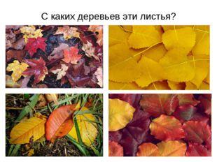 С каких деревьев эти листья?