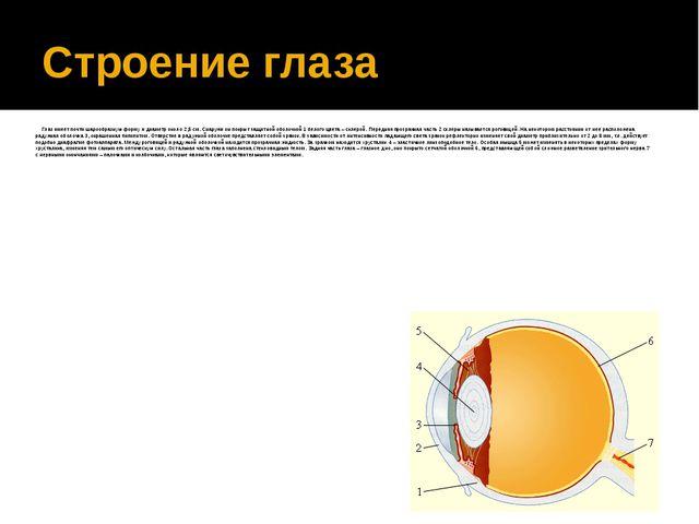 Строение глаза Глаз имеет почти шарообразную форму и диаметр около 2,5см. С...