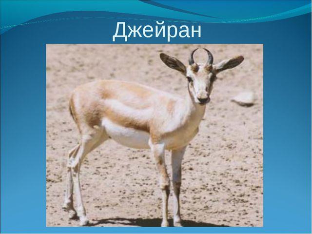 красная книга казахстана знакомство с джейраном