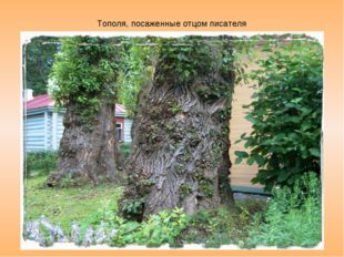 Бронзовый Антон Павлович на входе Тополя, посаженные отцом писателя