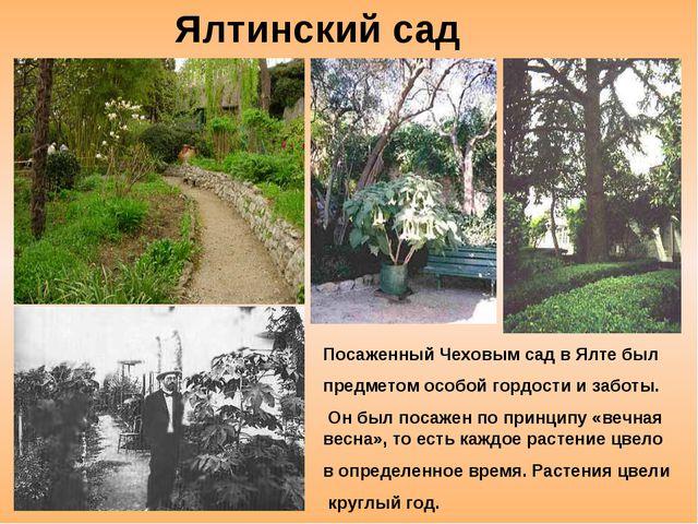 Посаженный Чеховым сад в Ялте был предметом особой гордости и заботы. Он был...