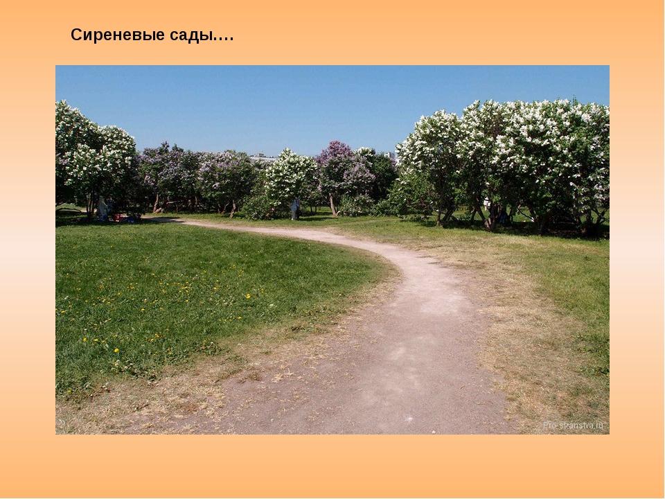 Сиреневые сады….