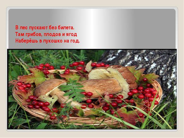 В лес пускают без билета. Там грибов, плодов и ягод Наберёшь в лукошко на год.