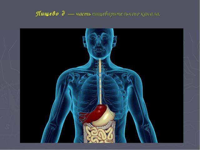 Пищево́д— частьпищеварительного канала.