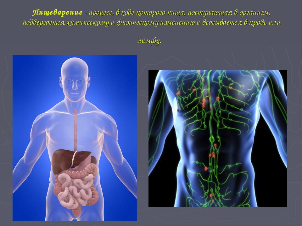 Пищеварение - процесс, в ходе которого пища, поступающая в организм, подверга...