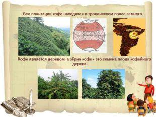 Все плантации кофе находятся в тропическом поясе земного шара. Кофе является