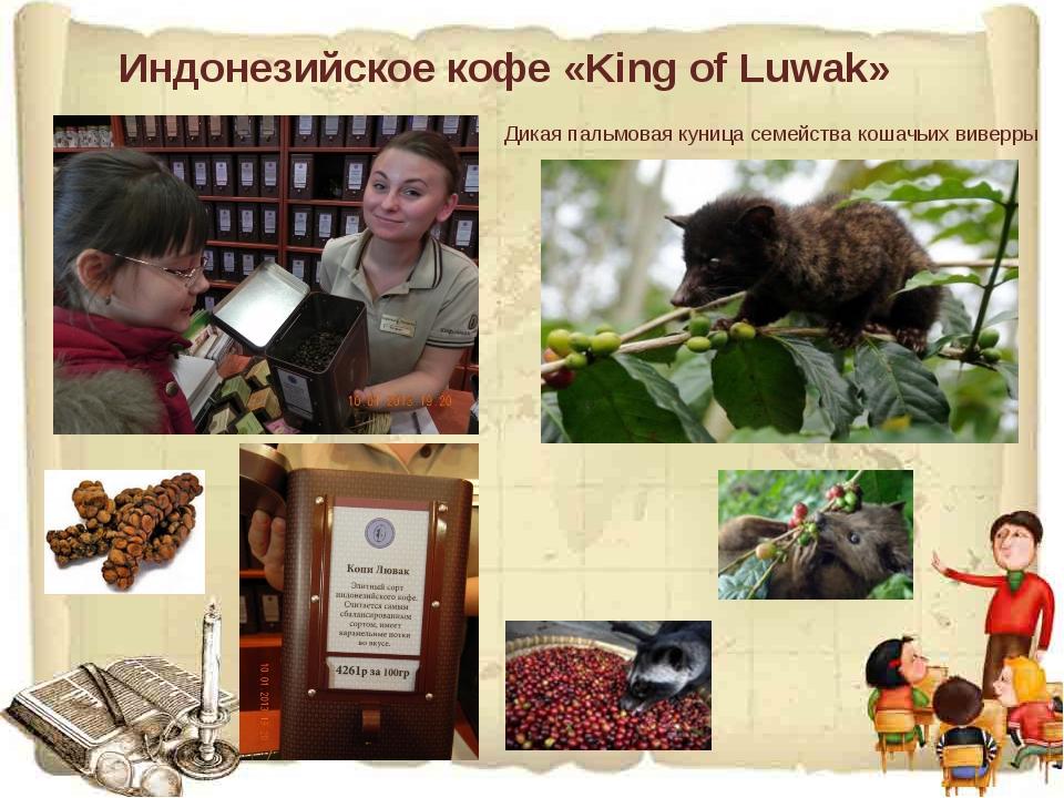 Индонезийское кофе «King of Luwak» Дикая пальмовая куница семейства кошачьих...