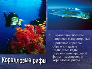 Коралловые полипы, например мадрепоровые и роговые кораллы образуют целые под