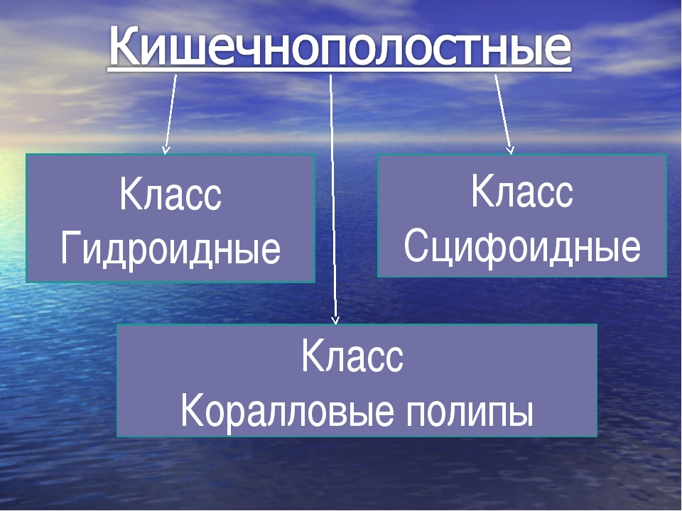 Класс Гидроидные Класс Коралловые полипы Класс Сцифоидные
