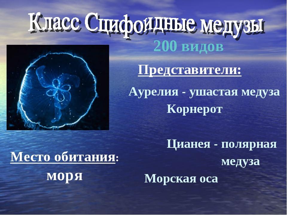 Аурелия - ушастая медуза Корнерот Цианея - полярная медуза Морская оса 200 ви...
