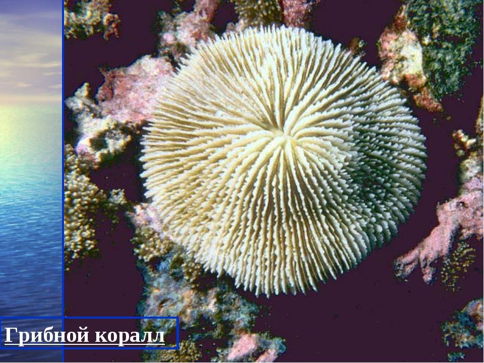 Грибной коралл
